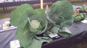 Albury Prod Show Cabbages 2014